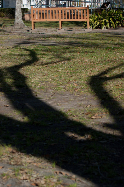 A tree shadow reaching for a solitary bench in Friendswood, TX