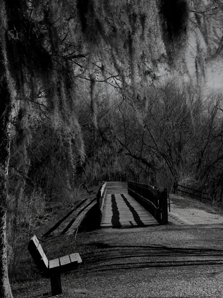 Bench awaiting the walkers at Brazos Bend State Park in Texas.