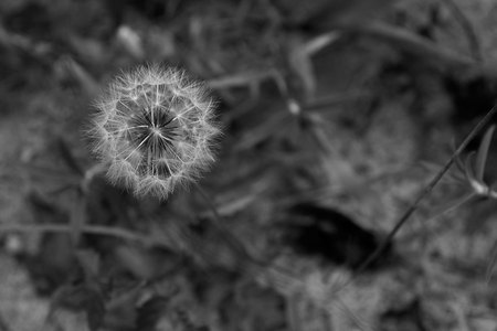 July 11, 2015:  About 35-40 years ago, I photographed a dandelion pod and always enjoyed looking at it.  This image reminded me of then...in many ways.  Visual memories have a way of carrying much with them.  Still...life.