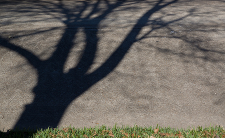 December 18, 2015:  A shadow tree grows from my yard and into the street. moving around as the sun moves. Shadow leaves are much easier to rake, I bet.  Still...life.