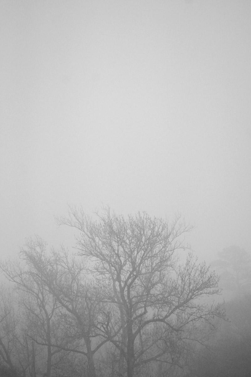 "January 18    The fog before the cold front provided a scene that was wonderful to look at, and inspired ideas for poetry and stories. Beautiful days don't need to be ""chamber of commerce"" days."
