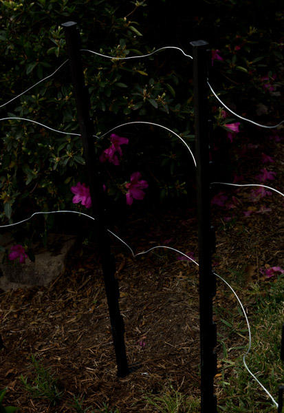 April 3  Wires glistening in abstract art forms belie their role to keep deer out of newly planted flowers. The beauty of art is everywhere.