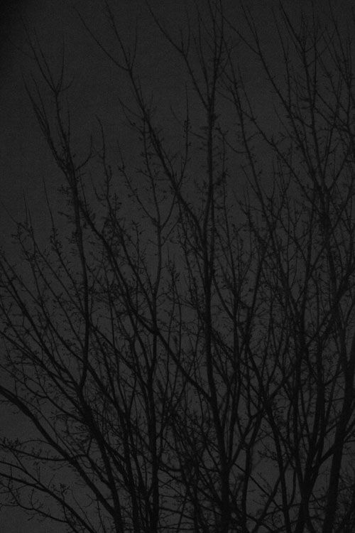 December 5 Strong winds move the trees to a spooky beauty at night, the images suitable for fairy tales set in dark woods.