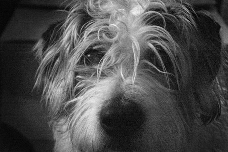 January 25, 2015:  The end of the long day and one of the last things that I see is the one who can't see me.  She is largely blind but as sweet as they come.  Old enough to have bladder issues but young enough to always wag her tail hello.  A simple pleasure.  Still...life.