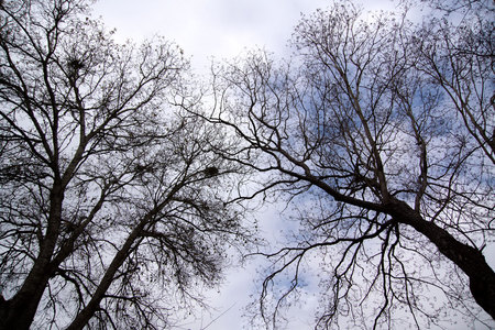 January 31, 2015:  The last remnant of blue as the gray rolls in.  The trees bearing signs of winter, but waiting for spring to roll in, too.  And so it goes in cycles.  Still...life.