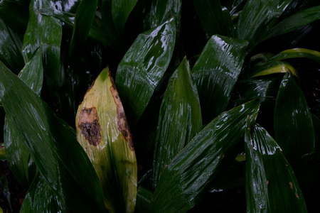 March 12, 2015:  Rain continues, providing wonderful colors, sheen and light.  Always so much to see.  Still...life.