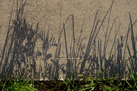 April 21, 2015:  This could be the signature of the grasses.  I've seen less legible that come from hands.  We all leave a signature whether we know it or not.  Still...life.