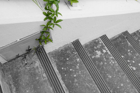 July 7, 2015:  Leaf and stone; alive and dead; dynamic and static; yin and yang.  Still...life.