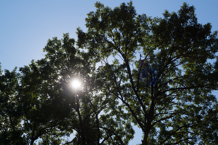 September 20, 2015:  The sun winks through the trees, catching my eye and my heart.  Still...life.