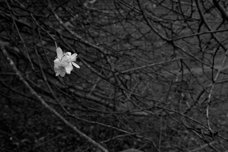 December 30, 2015:  The bare branches reveal that it is supposed to be winter; the new bloom reminds us that, despite all appearances, there is...Still...life.