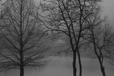 January 8 Fog is flirtatious and beautiful, hiding from the viewer just enough to increase the interest to see more.
