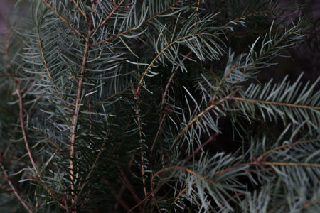 December 13   The beauty of Christmas tree textures.